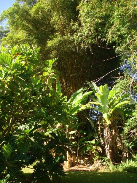 Akiko Bananas, Breadfruit, bamboo